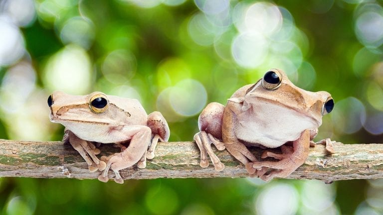 responsible-travel-ideas-puerto-rico-coqui-frogs