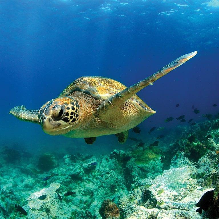 tauck-criuses-tours-galapagos