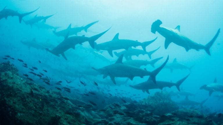 citizen-scientist-trip-ideas-galapagos-islands-count-sharks