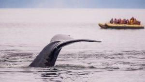 citizen-scientist-trip-ideas-whale-watching