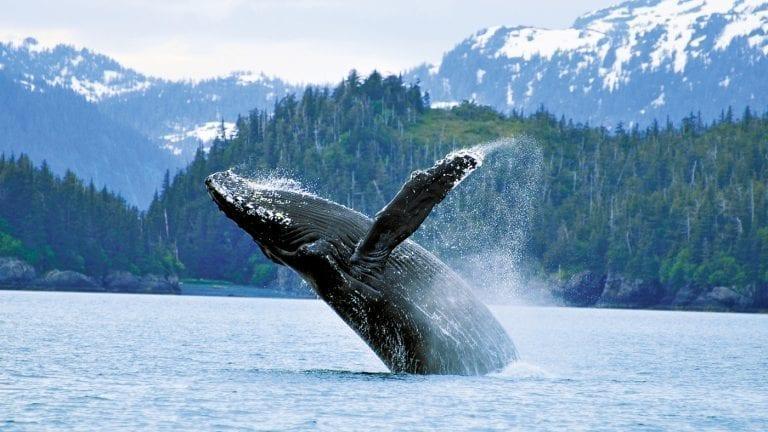 cruisetours-alaska-royal-caribbean-wildlife