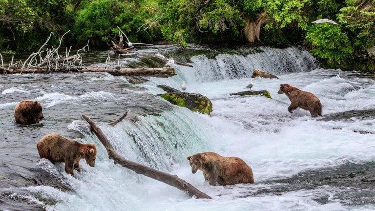 best-places-to-visit-in-alaska-brooks-river-falls