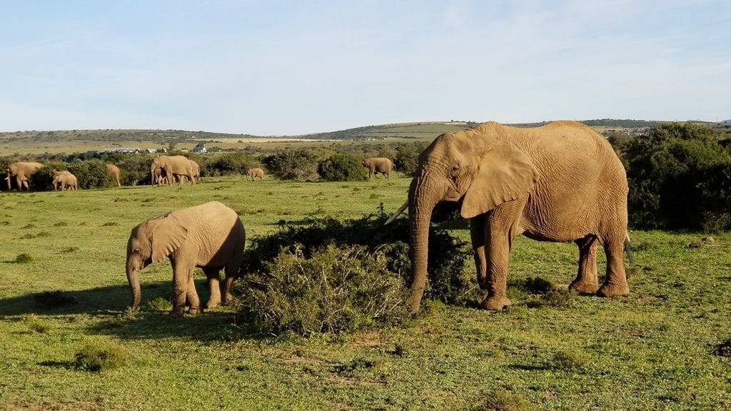 trip-to-south-africa-opt-for-change-elephants