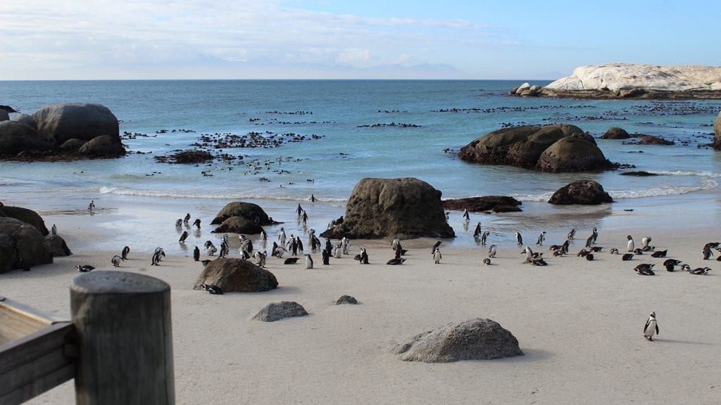trip-to-south-africa-opt-for-change-penguins