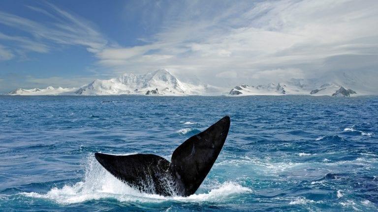 vacation-inspiration-antarctica