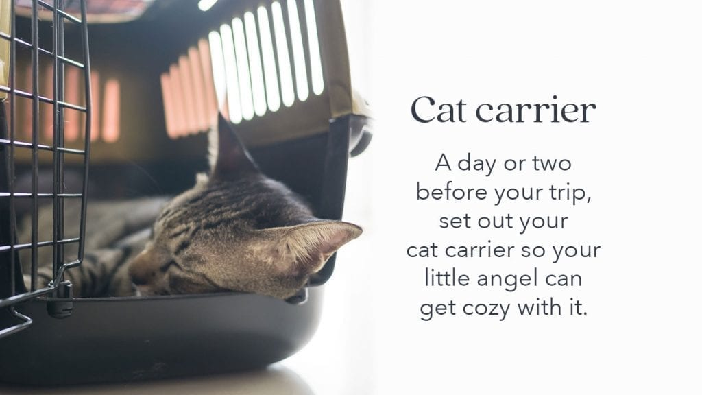 prepare-pets-cats