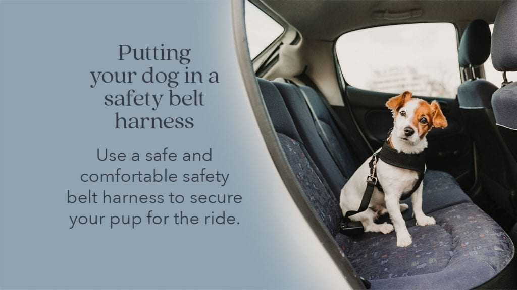 prepare-pets-safety-belt