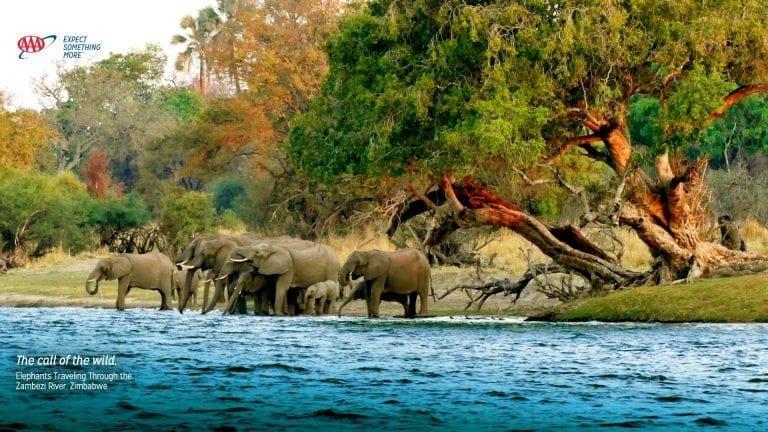 virtual-backgrounds-elephant