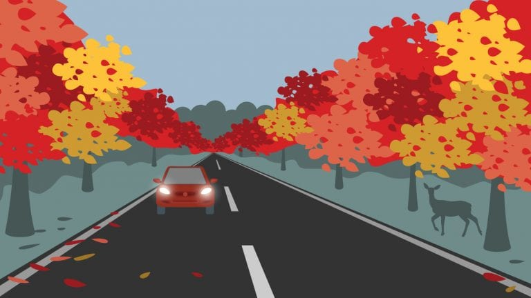 fall-driving-tips